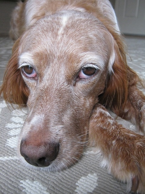 How to treat muscle spasms in dogs