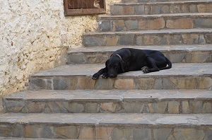 Dog has trouble on stairs