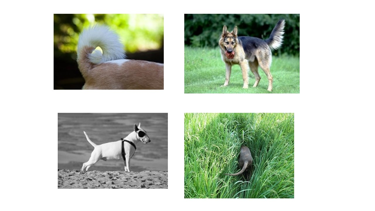 why-is-my-dog-not-wagging-his-tail | Full Stride | Canine ...