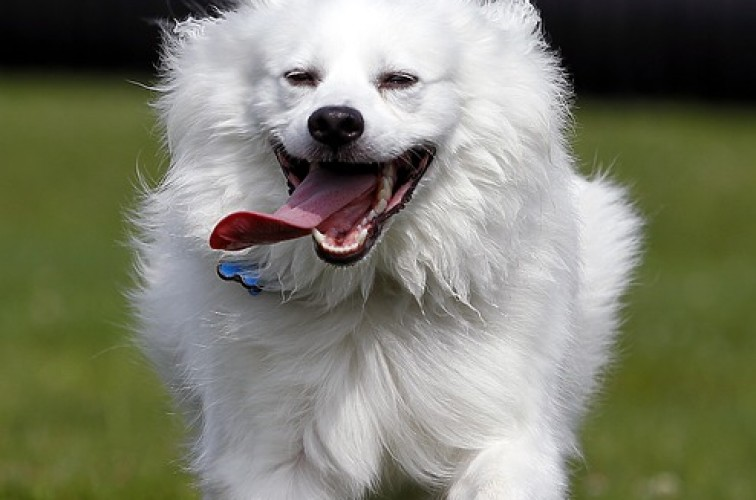 Natural treatment for post-exercise stiffness in dogs